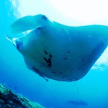 石垣島ダイビング 資料請求