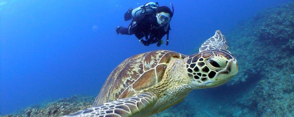 沖繩でのダイビング