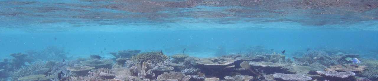 海の環境保護活動